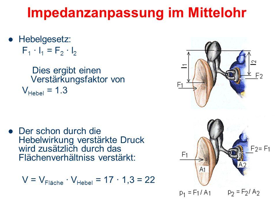 Impedanzanpassung im Mittelohr Um Reflexionsverluste auszugleichen, ist eine Druckerhöhung am ovalen Fenster gegenüber dem Druck am Trommelfell notwen