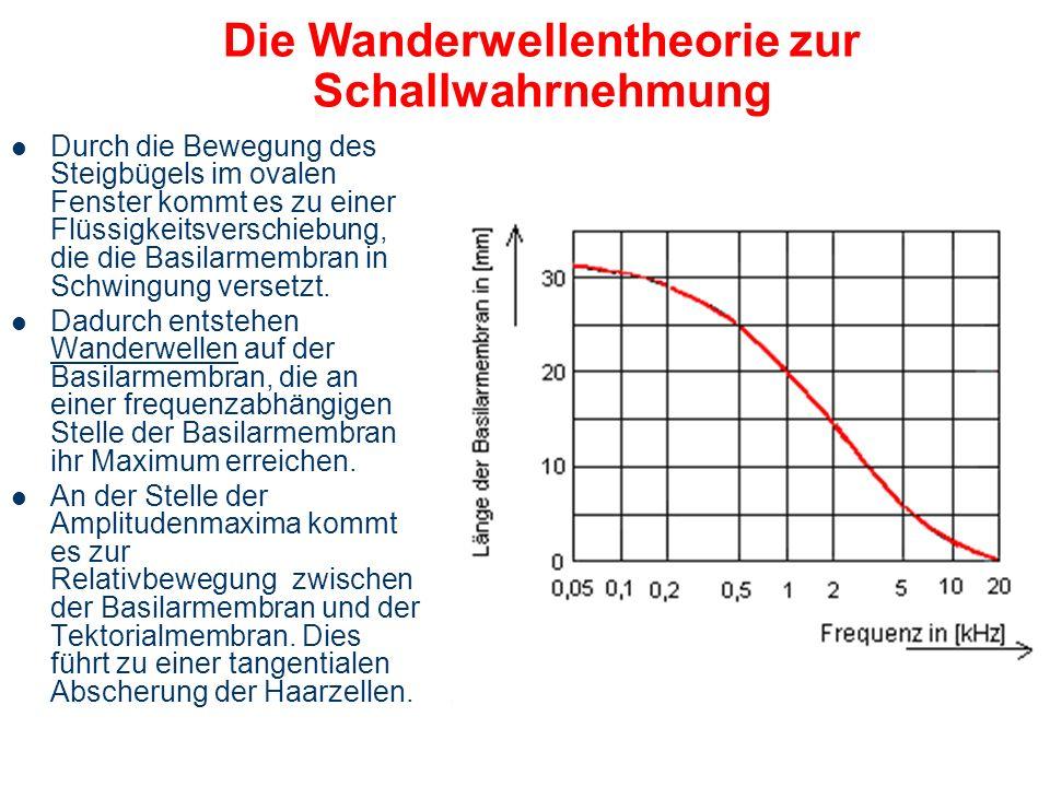 Wanderwelle-Theory von Békésy Die Hörschnecke abgerollt Békésy György (1899-1972) Nobel Preis 1961