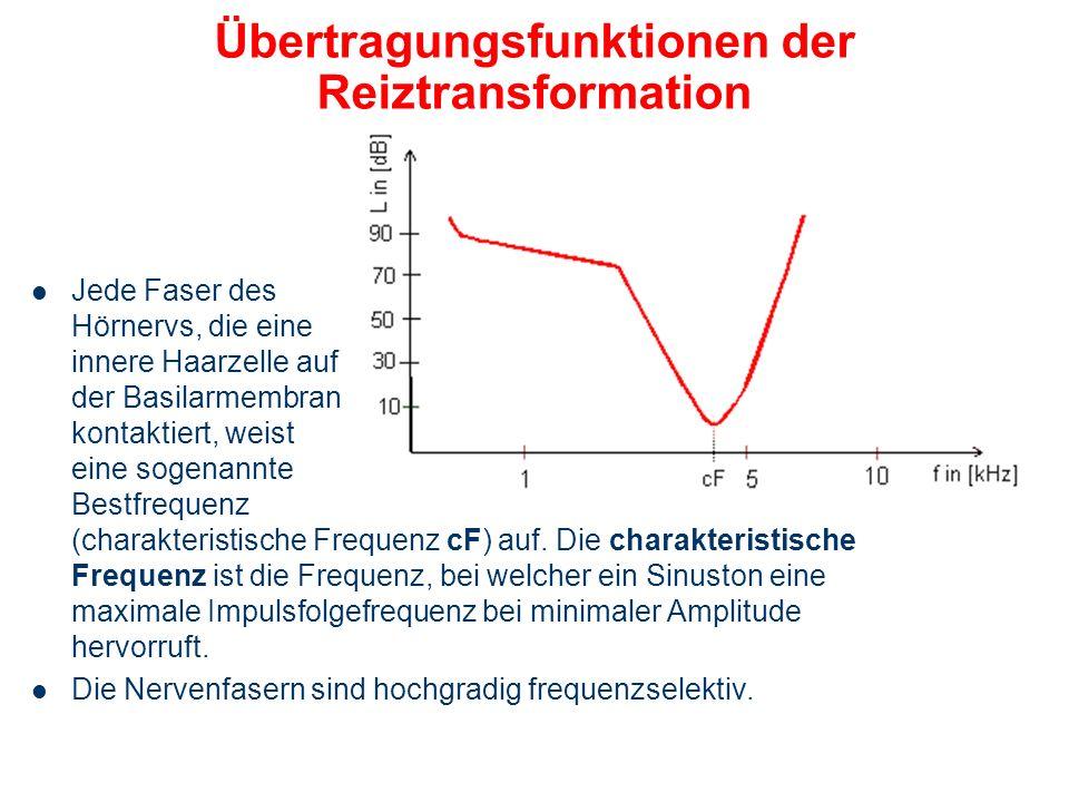 Übertragungsfunktion des Innenohres Die Übertragungsfunktion des Innenohres wird durch das Verhältnis der Auslenkung der Basilarmembran zur Auslenkung