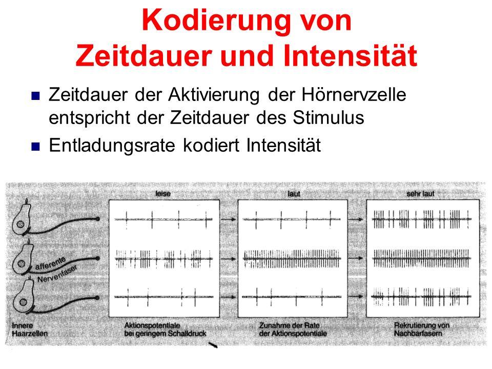 Phasenkodierung Maximale Entladungsrate in oberer Umkehrphase