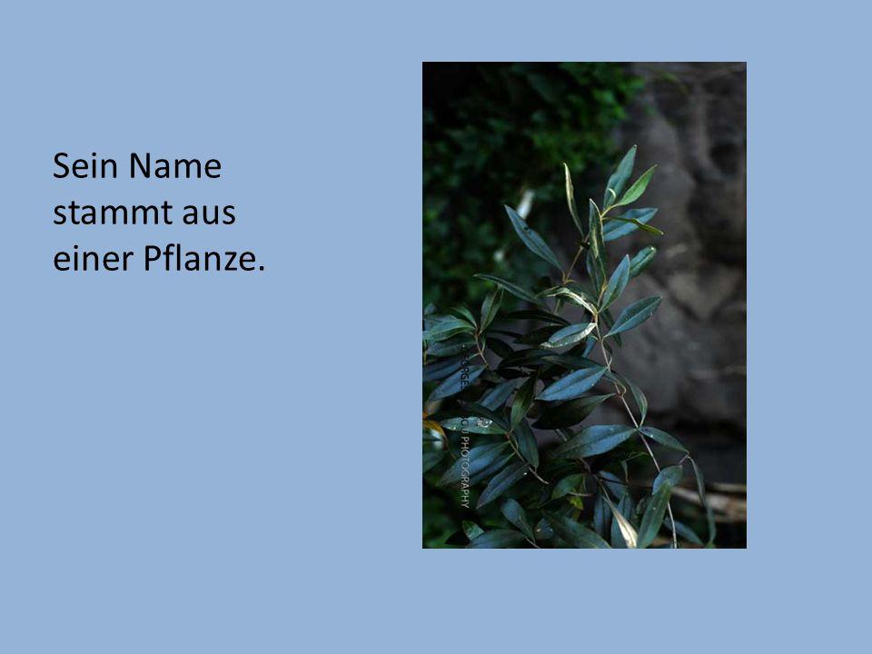 Sein Name stammt aus einer Pflanze.