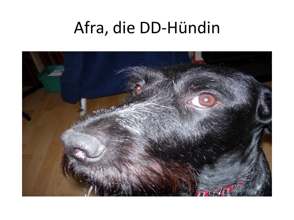 Afra, die DD-Hündin