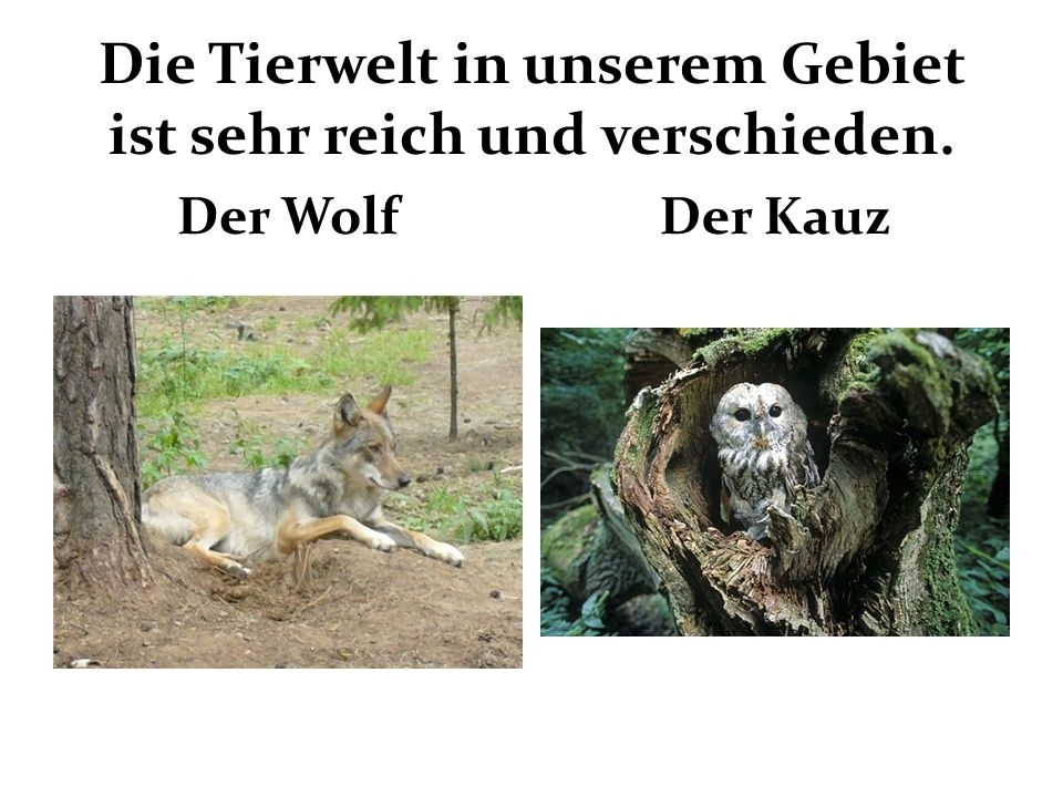 Die Tierwelt in unserem Gebiet ist sehr reich und verschieden. Der WolfDer Kauz