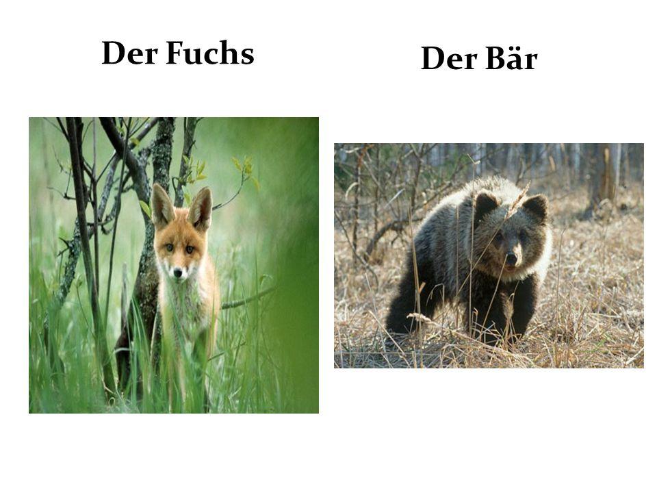Der Fuchs Der Bär