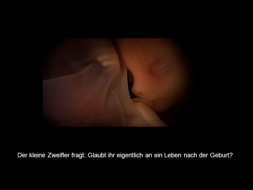 Die drei Embryonen Im Bauch einer schwangeren Frau sind drei Embryonen. Einer davon ist der kleine Gläubige, einer ist der kleine Skeptiker und der dr
