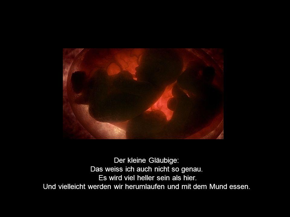 Der kleine Skeptiker: Blödsinn, das gibt es nicht. Wie soll das überhaupt aussehen, ein Leben nach der Geburt?