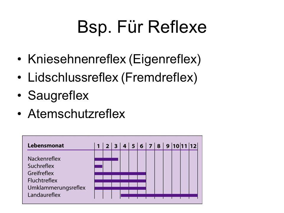 Bsp. Für Reflexe Kniesehnenreflex (Eigenreflex) Lidschlussreflex (Fremdreflex) Saugreflex Atemschutzreflex