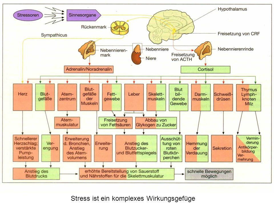 Stress ist ein komplexes Wirkungsgefüge