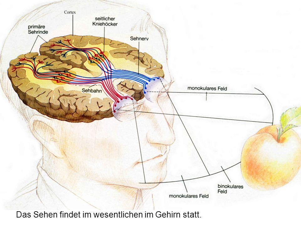 Das Sehen findet im wesentlichen im Gehirn statt.