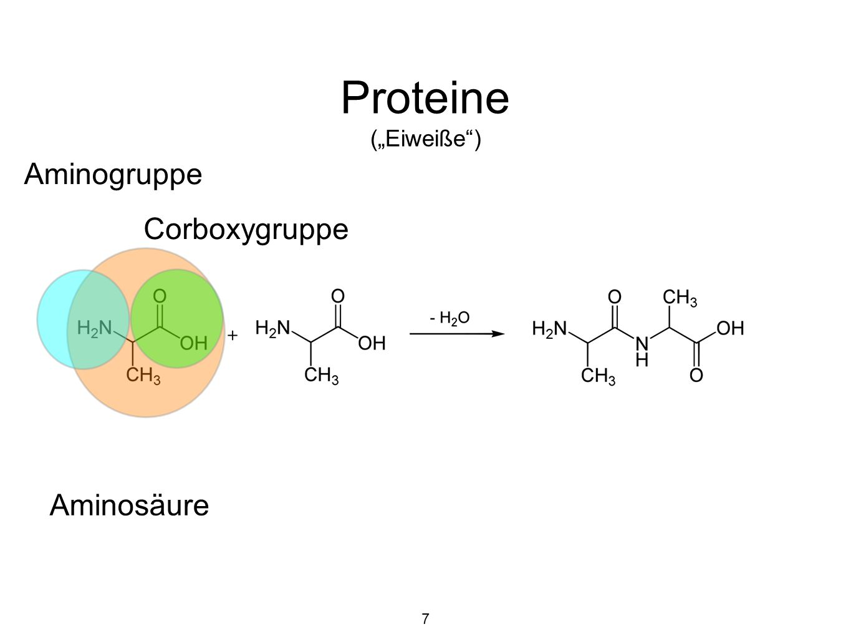 """Proteine (""""Eiweiße ) 7 Aminosäure Corboxygruppe Aminogruppe"""