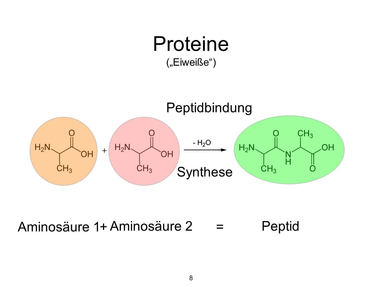 """Proteine (""""Eiweiße ) Primärstruktur = Aminosäuresequenz 19"""