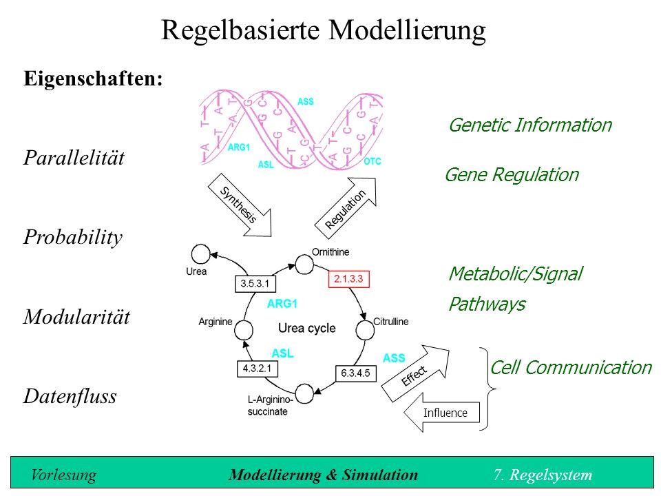 Metabolic/Signal Pathways Cell Communication Synthesis Regulation Influence Effect Gene Regulation Regelbasierte Modellierung Eigenschaften: Parallelität Probability Modularität Datenfluss Genetic Information Vorlesung Modellierung & Simulation7.