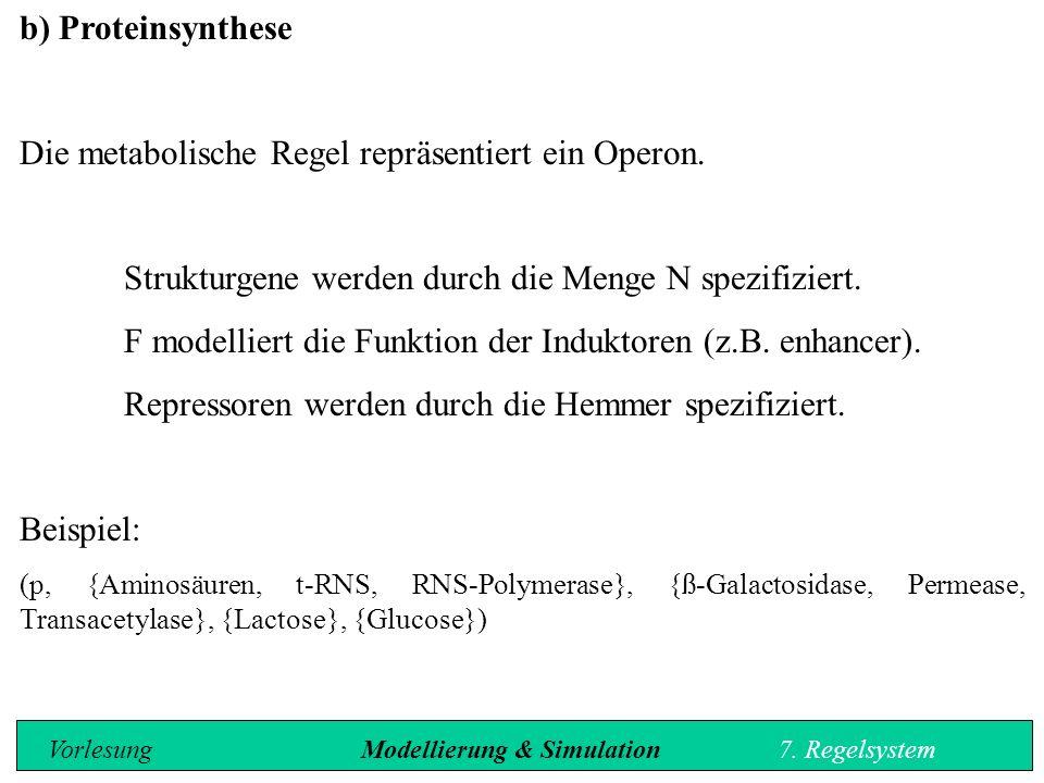 b) Proteinsynthese Die metabolische Regel repräsentiert ein Operon.