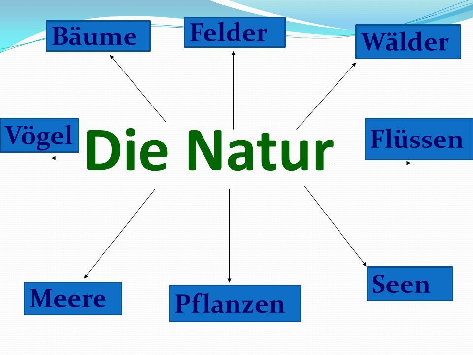 Die Natur Bäume Felder Wälder Flüssen Seen Pflanzen Meere Vögel