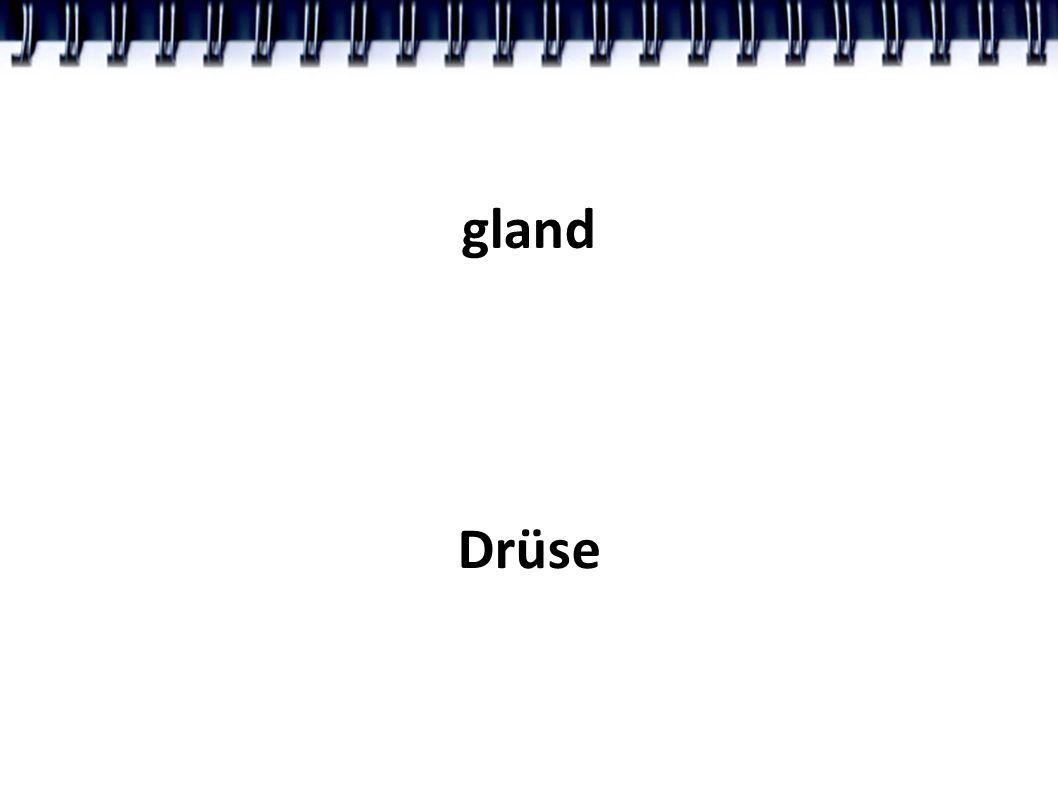 gland Drüse