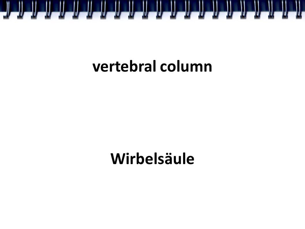vertebral column Wirbelsäule