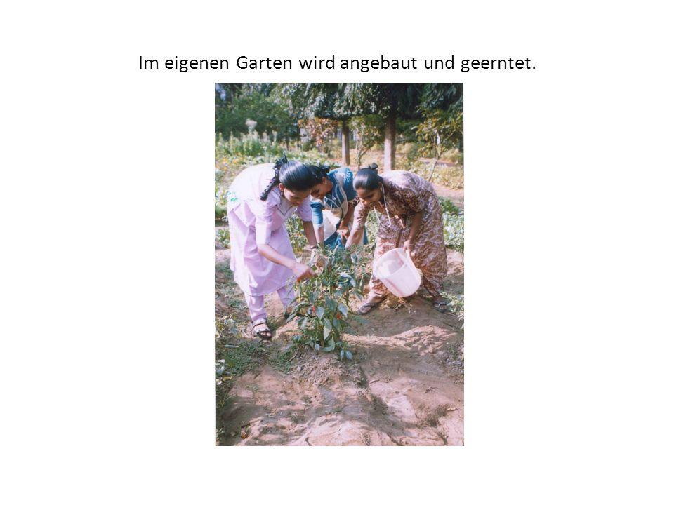 Im eigenen Garten wird angebaut und geerntet.