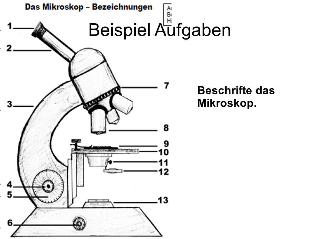 Beispiel Aufgaben Beschrifte das Mikroskop.