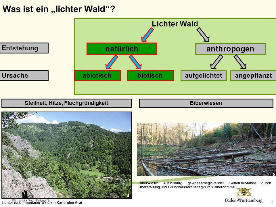 5 Steilheit, Hitze, Flachgründigkeit Lichter (sub-) montaner Wald am Karlsruher Grat Biberwiesen Biberwiese: Auflichtung gewässerbegleitender Gehölzbe