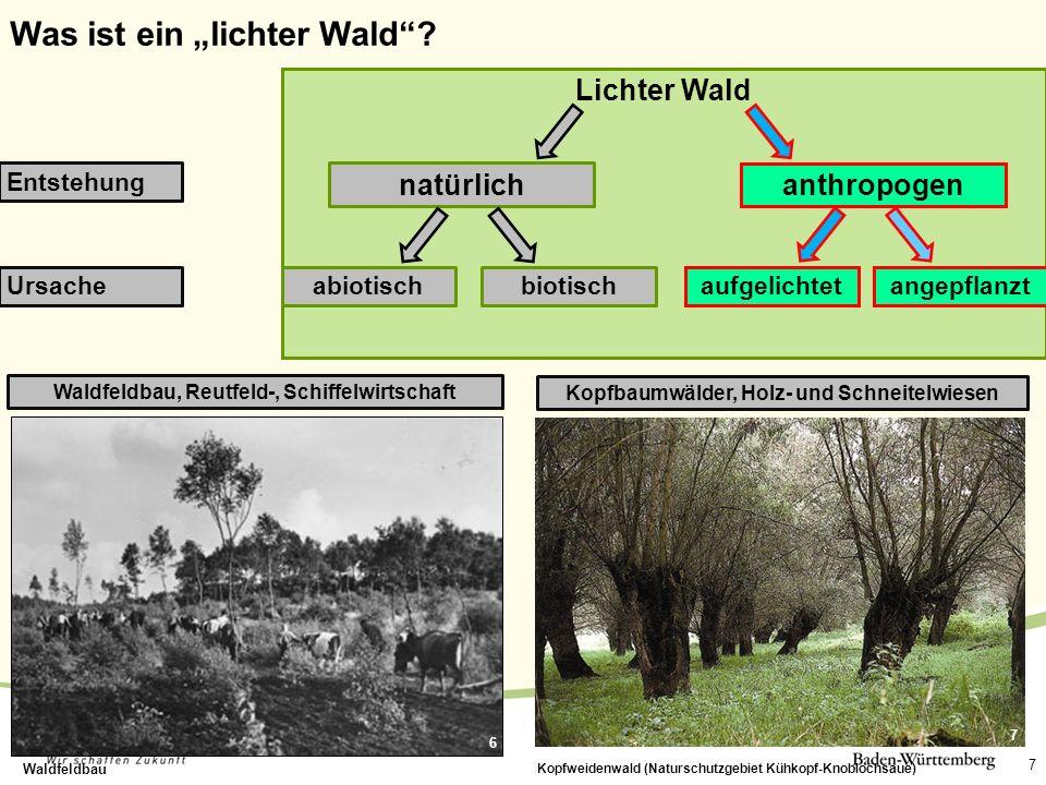 Waldfeldbau, Reutfeld-, Schiffelwirtschaft 7 Waldfeldbau Lichter Wald natürlich anthropogen Entstehung abiotischaufgelichtetUrsachebiotischangepflanzt