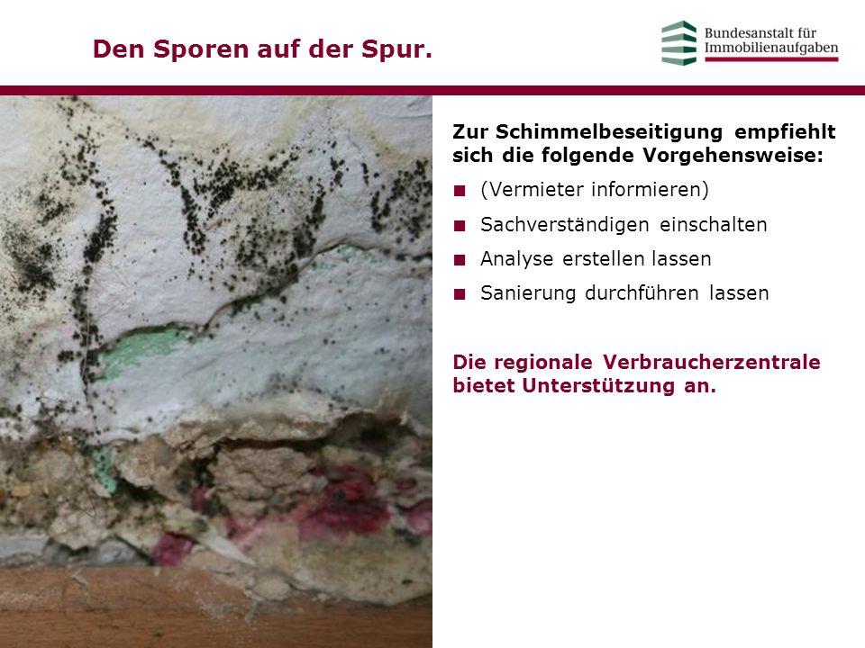 Den Sporen auf der Spur. Zur Schimmelbeseitigung empfiehlt sich die folgende Vorgehensweise: ■ (Vermieter informieren) ■ Sachverständigen einschalten