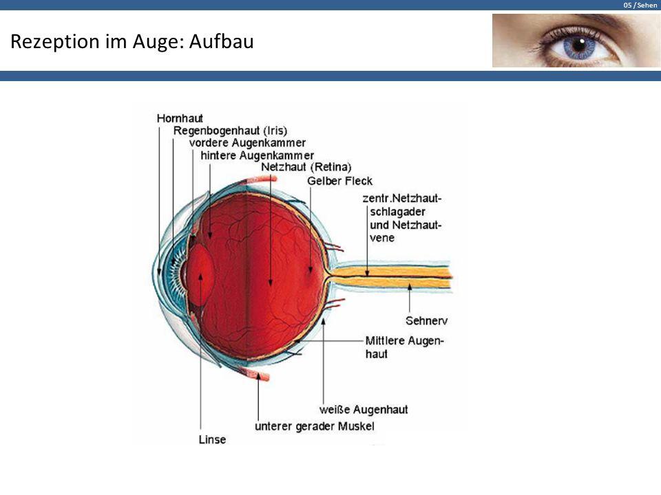 05 / Sehen Rezeption im Auge: Aufbau