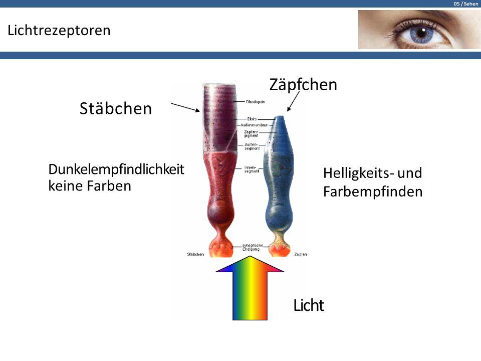 05 / Sehen Lichtrezeptoren Zäpfchen Stäbchen Dunkelempfindlichkeit keine Farben Helligkeits- und Farbempfinden Licht