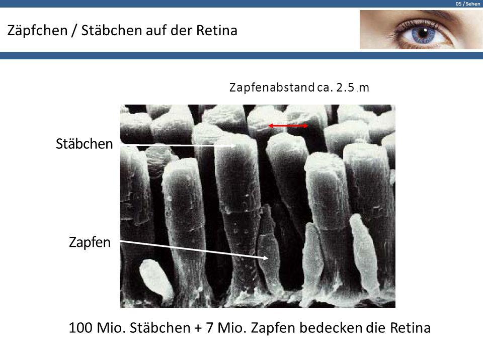 05 / Sehen Zäpfchen / Stäbchen auf der Retina Zapfenabstand ca. 2.5 µ m Stäbchen Zapfen 100 Mio. Stäbchen + 7 Mio. Zapfen bedecken die Retina