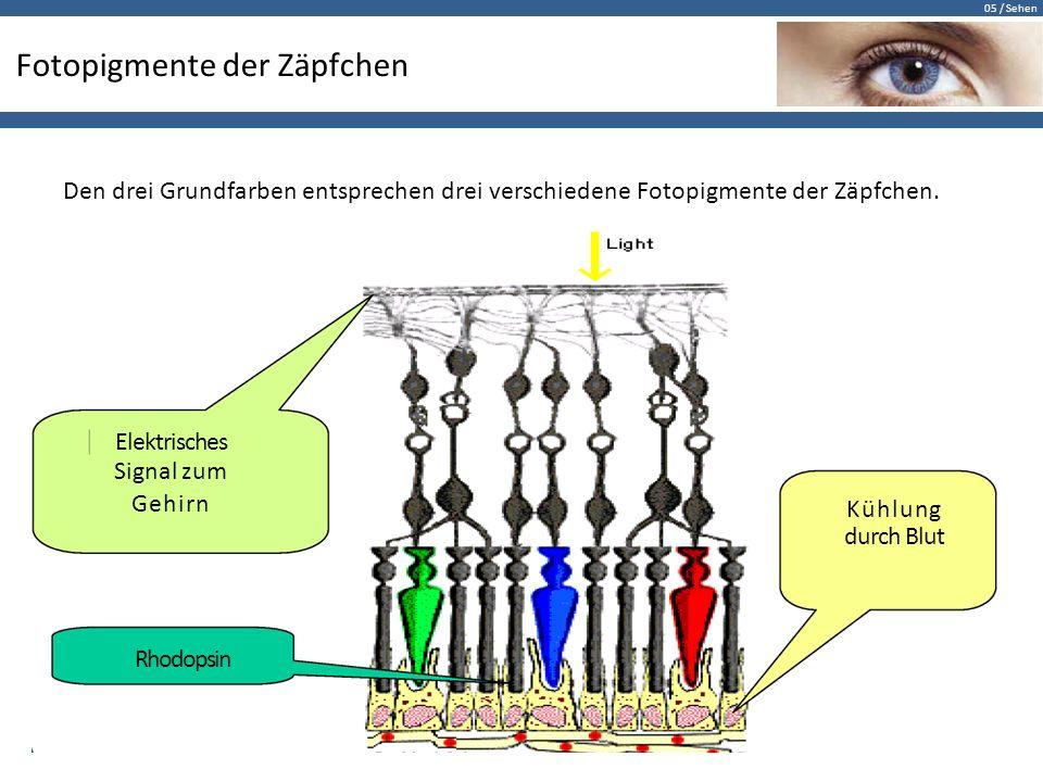 05 / Sehen Fotopigmente der Zäpfchen Den drei Grundfarben entsprechen drei verschiedene Fotopigmente der Zäpfchen. Elektrisches Signal zum Gehirn Kühl
