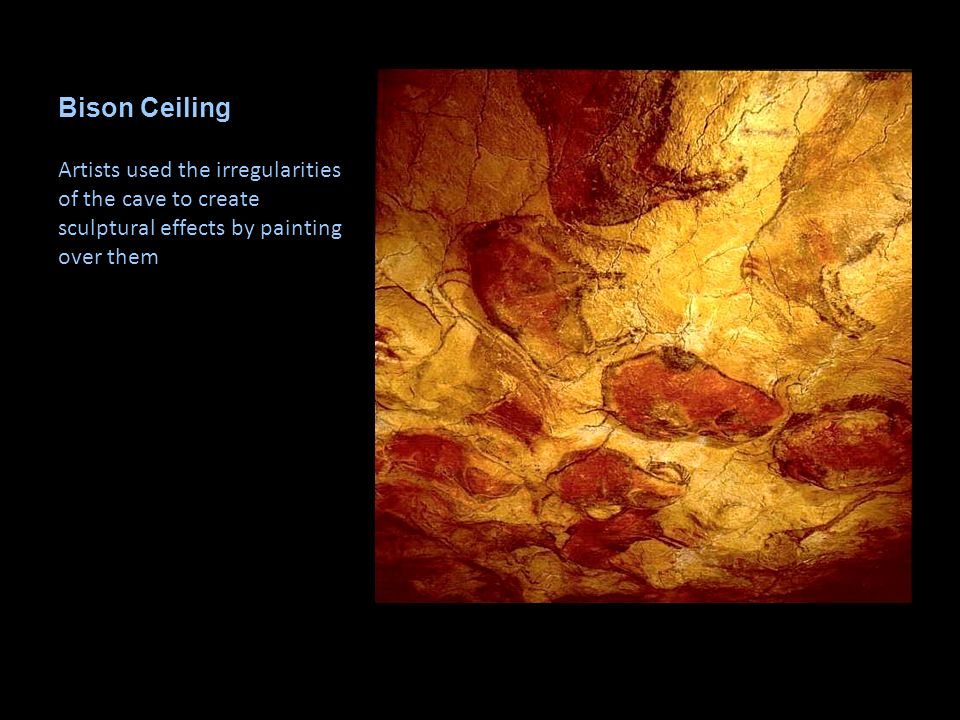 Bison Ceiling Artists used the irregularities of the cave to create sculptural effects by painting over them