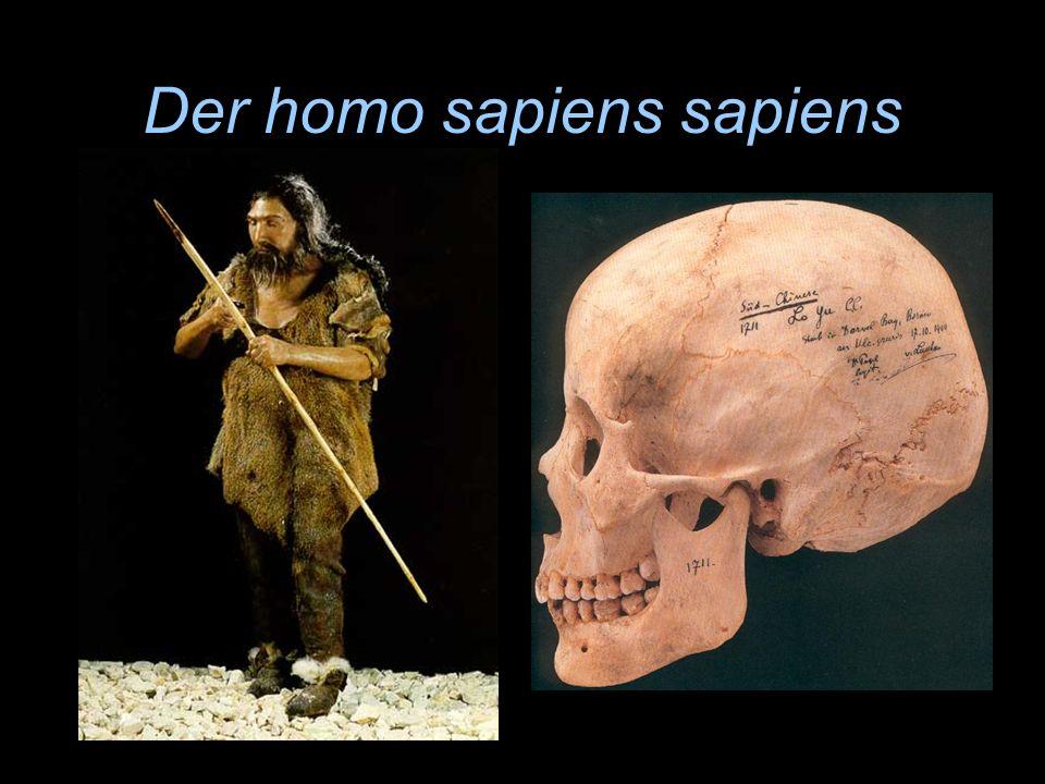Der homo sapiens sapiens