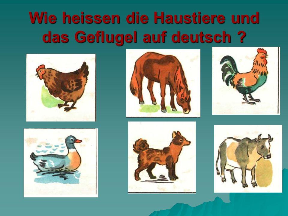Wie heissen die Haustiere und das Geflugel auf deutsch ?