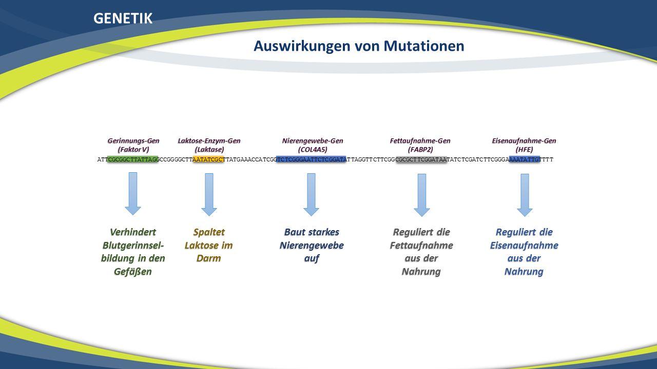 GENETIK Auswirkungen von Mutationen ATTCGCGGCTTATTAGGCCGGGGCTTAATATCGCTTATGAAACCATCGGTCTCGGGAATTCTCGGATATTAGGTTCTTCGGCGCGCTTCGGATAATATCTCGATCTTCGGGAAA