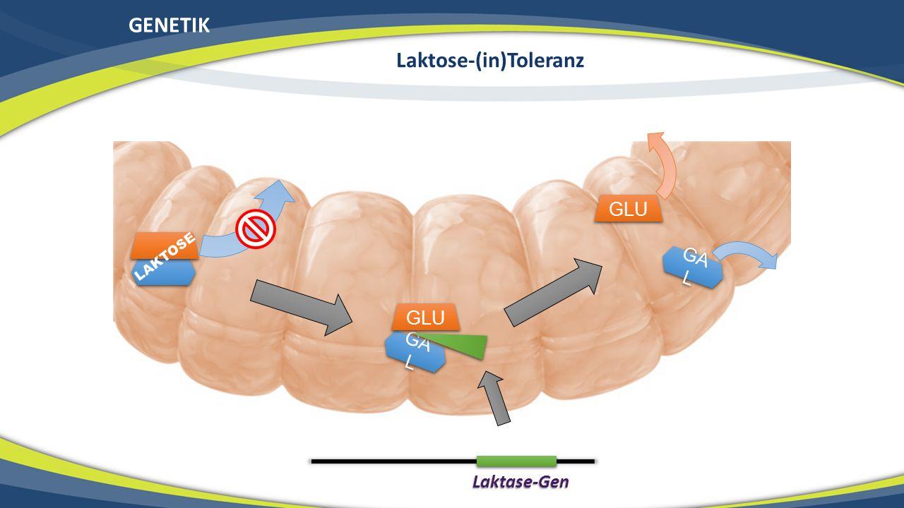 GENETIK Laktose-(in)Toleranz GA L GLU LAKTOSE Laktase-Gen GLU GA L