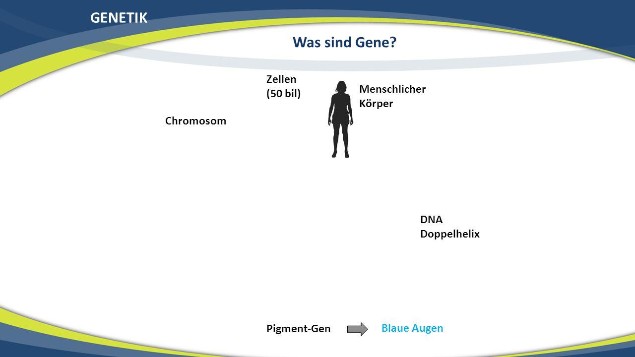 Menschlicher Körper Zellen (50 bil) Chromosom DNA Doppelhelix Pigment-Gen GENETIK Was sind Gene? Blaue Augen