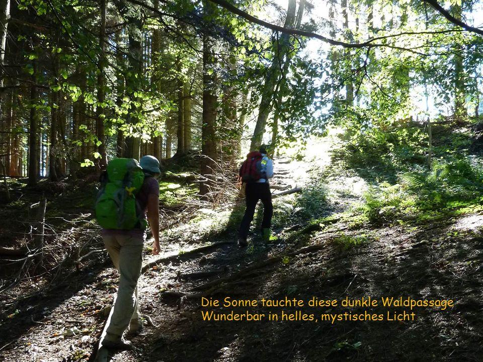 Die Sonne tauchte diese dunkle Waldpassage Wunderbar in helles, mystisches Licht
