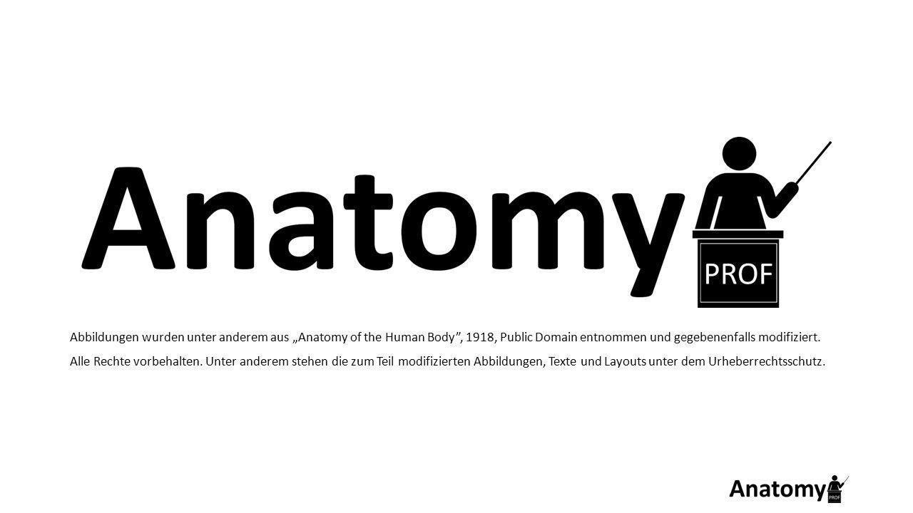 """Abbildungen wurden unter anderem aus """"Anatomy of the Human Body"""", 1918, Public Domain entnommen und gegebenenfalls modifiziert. Alle Rechte vorbehalte"""