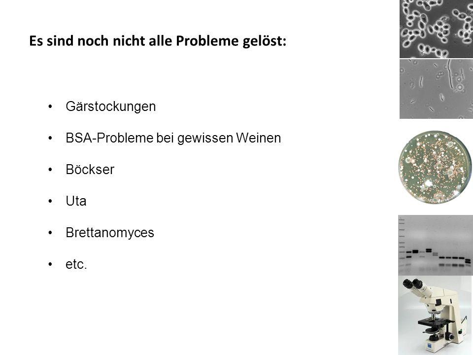 Es sind noch nicht alle Probleme gelöst: Gärstockungen BSA-Probleme bei gewissen Weinen Böckser Uta Brettanomyces etc.