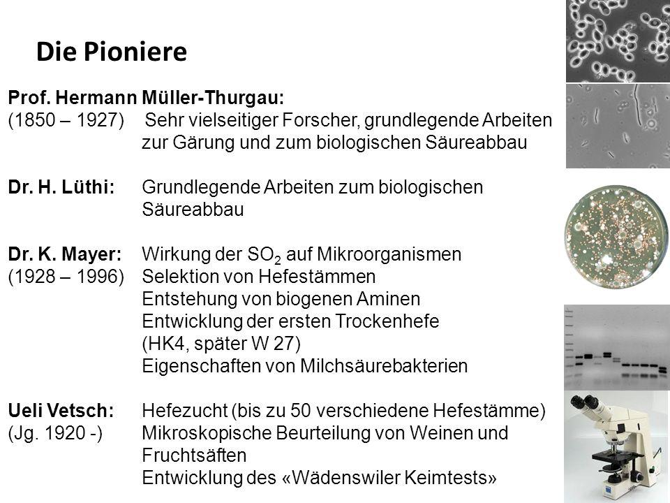 Prof. Hermann Müller-Thurgau: (1850 – 1927) Sehr vielseitiger Forscher, grundlegende Arbeiten zur Gärung und zum biologischen Säureabbau Dr. H. Lüthi: