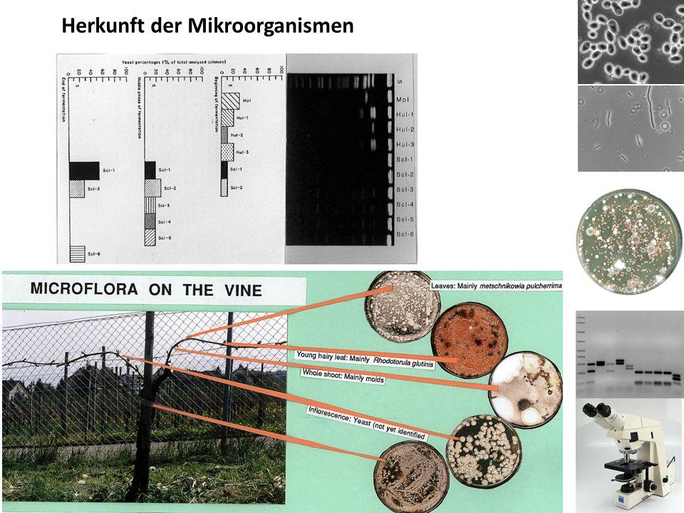 Herkunft der Mikroorganismen