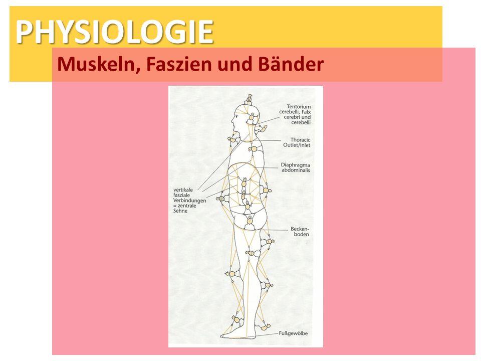 PHYSIOLOGIE Muskeln, Faszien und Bänder