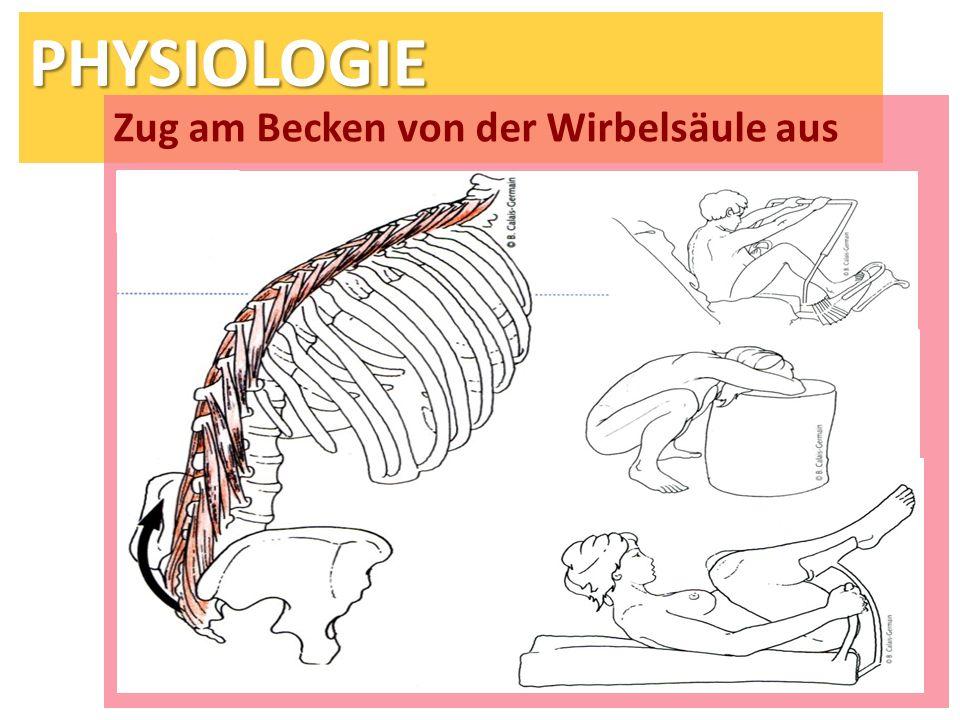 PHYSIOLOGIE Zug am Becken von der Wirbelsäule aus