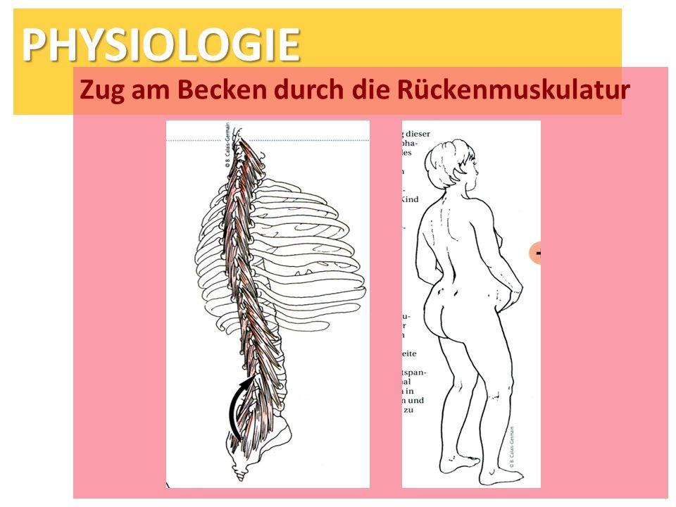 PHYSIOLOGIE Zug am Becken durch die Rückenmuskulatur