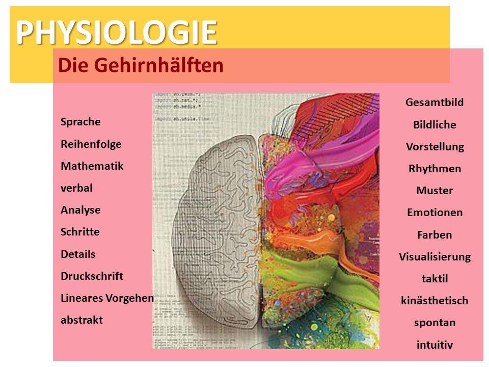 PHYSIOLOGIE Die Gehirnhälften Sprache Reihenfolge Mathematik verbal Analyse Schritte Details Druckschrift Lineares Vorgehen abstrakt Gesamtbild Bildli