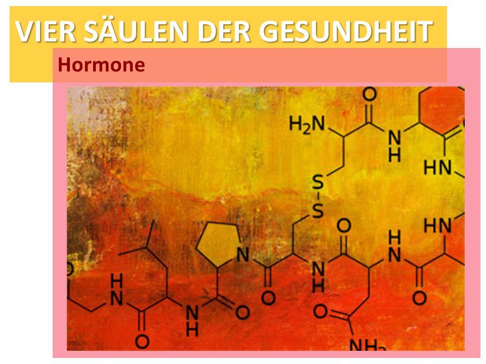 VIER SÄULEN DER GESUNDHEIT Hormone