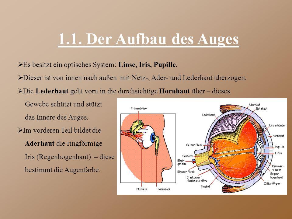 1.1. Der Aufbau des Auges  Es besitzt ein optisches System: Linse, Iris, Pupille.  Dieser ist von innen nach außen mit Netz-, Ader- und Lederhaut üb
