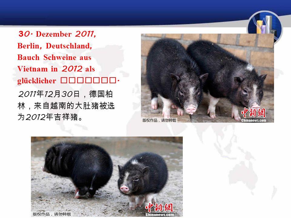 2007 年 12 月 28 日, Die Meishan Schwein gezüchtet im Tierpark in Berlin, Deutschland ( Meishan pig ) hieß der 2008 auspicious Schwein. 德国柏林 的 Tierpark 动
