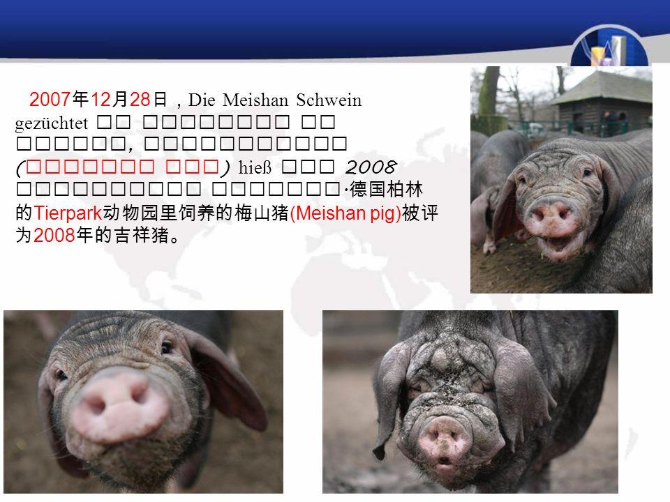 元旦 Neujahr 吉祥物: 1.Schwein 吉祥猪。 Schwein ist ein Symbol des Heiligen, auspicious 猪象征神圣,吉利,猪也是日 耳曼墓地里最珍贵的祭品。德语里的一个 习惯用语,谁有好运,就是谁有猪 : Du hast Schwein. Der