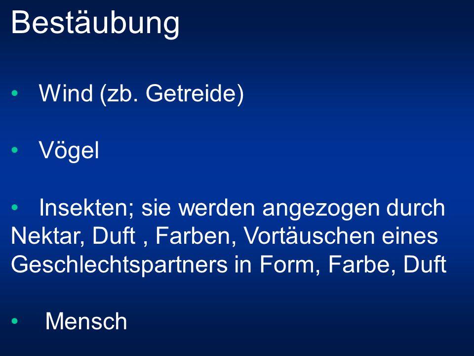 Bestäubung Wind (zb.