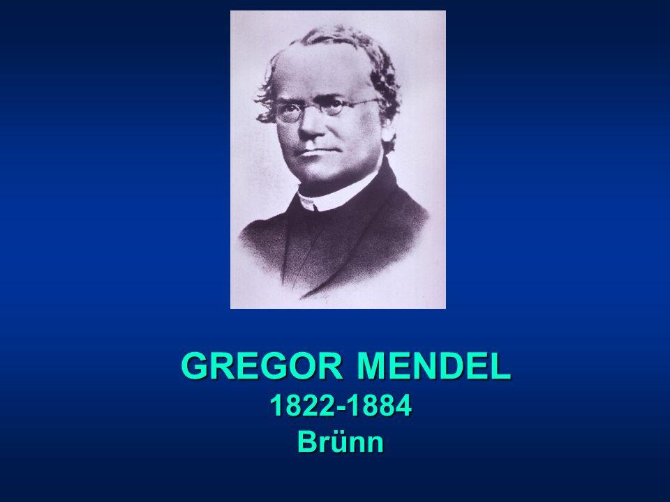 GREGOR MENDEL GREGOR MENDEL1822-1884Brünn